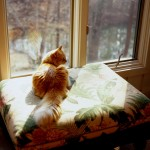 Сбереги тепло дома